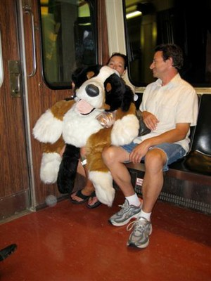 06 St. Bernard on the t.JPG